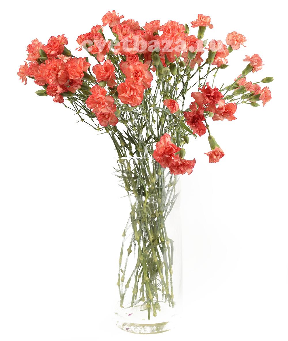 Цветов, срезанные цветы гвоздика купить минск